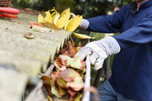 Leaves in eaves
