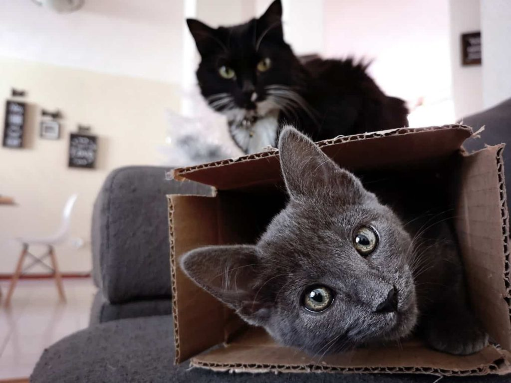 2 cats, 1 grey inside box, 1 black on top of box
