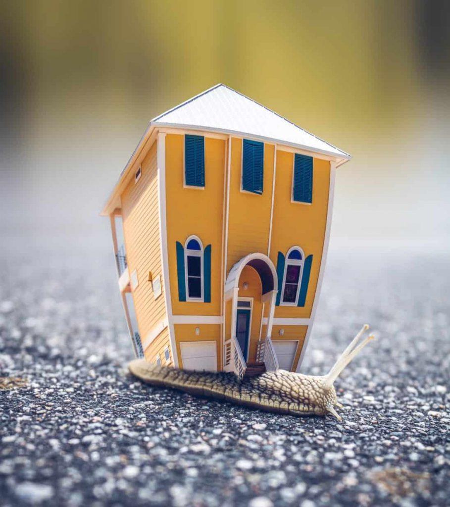 Slug carrying a small model house